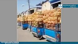 پیاز؛ روی دست کشاورزان خوزستانی