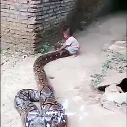 کودک و مار