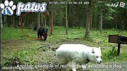 حمله حیوانات