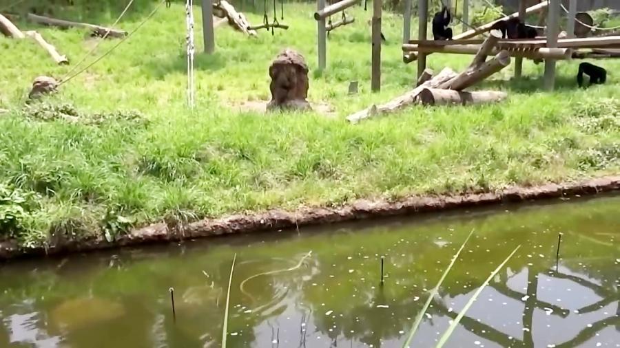 - حمله حیوانات شگفت انگیز در باغ وحش