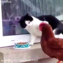 حیوانات با احساس