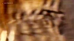 ویدئو کلیپی از گلچین صحنه های مبارزه و شکار حیات وحش          worldpets.ir