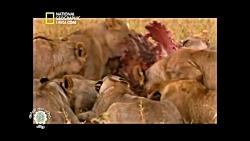 مستند فارسی -  شکارچیان ...