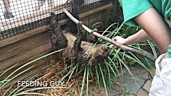 گردشگری |Feeding Sloths