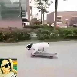 سگ اسکوتر باز