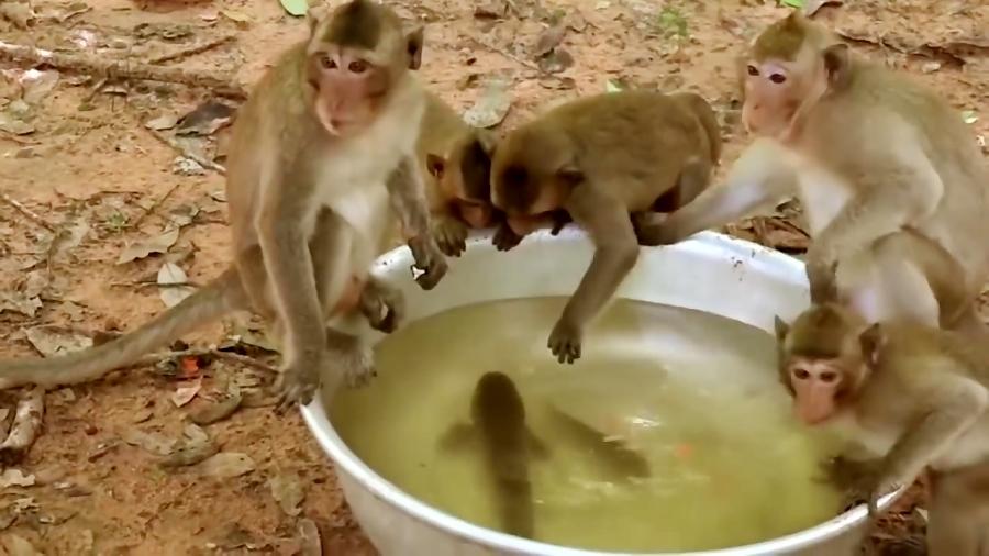 شگفت انگیز مار حمله میمون هوشمند در حالی که ماهی بازی - حمله شگفت انگیز حیوانات