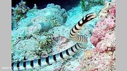 ترسناک ترین و خطرناک ترین و سمی ترین مارهای جهان