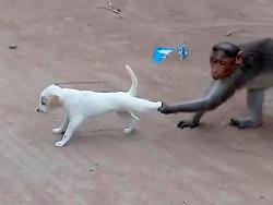 بازی میمون با سگ - بیچاره سگه