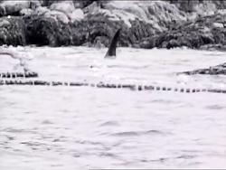 مستندی از قاتلین بالفطره زیبا - این ویدیو زیبا رو از دست ندین