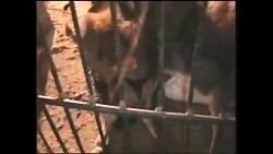 فیلمی غم انگیز از سیرک