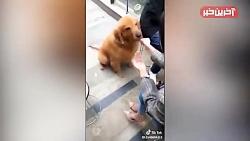 حیوانات بامزه