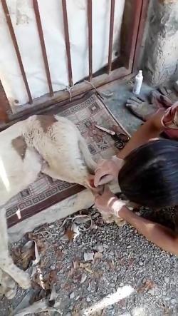 امداد حیوانات