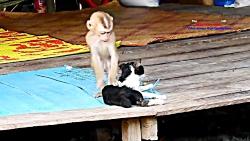 بازی بچه میمون با گربه - بیچاره گربه