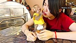 چالش خوردن غذا با میمون - خداییش خیلی بامزس