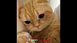 ♥ ناز گربه ها و بچه گربه ها چیزهای خنده دار 2018 ♥ # 7 - خنده دار گربه تلفیقی