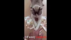 ♥ گربه ها و بچه گربه ها انجام چیزهای خنده دار 2018 ♥ # 6 - خنده دار گربه تلفیق