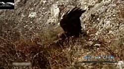 مستند شکار حیوانات مرگ...