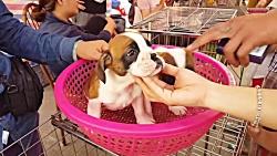 بازار سگ فروشان - بازار ...