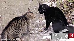 جنگ و نبرد حیوانات در ح...
