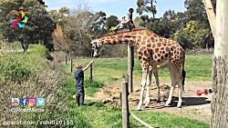 باغ وحشی که در آن حیوان...