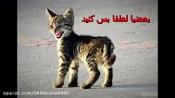 حیوان ازاری ممنوع (نشر ...