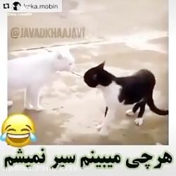 دعوا گربه سیاه و سفید و سفید