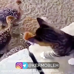 طنز—مستند—گربه