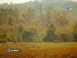 مستند حیات وحش هندوستا...
