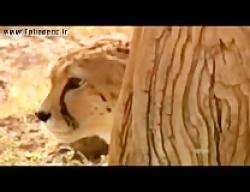 مستند حیات وحش طبس