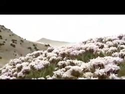 مستند حیات وحش پارک ملی...