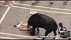خطرناک ترین حیوانات که به انسان حمله می کنند !!