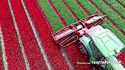 چیدن گل با ماشین در مزرعه (بسیار زیباست)