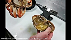 هر آنچه باید درباره نحوه تمیز کردن ، پاک کردن و خوردن خرچنگ بدانیم!