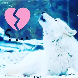 Keep calm and  love love love wolfs ❤__❤
