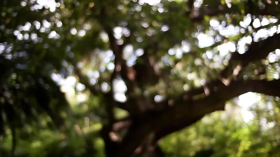 Where Do Trees Get Their Mass?