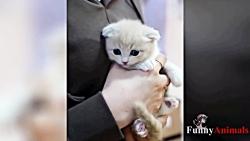 فیلم Cutest Dogs و Cat Video - فیلم خنده دار کودک ناز # 5