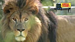 فیلم حیوانات حمله حیوا...