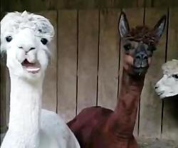 حیوانات عجیب و گوگل است...