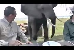 عاقبت نزدیک شدن به حیوا...