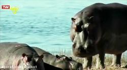 کتاب وحش - حیوانات آفری...