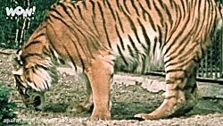 حیوانات منقرض شده