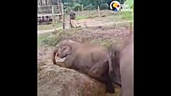 نجات حیوانات توسط حیوا...