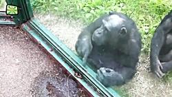 حمله حیوانات در باغ وحش