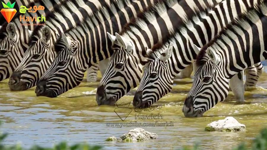 ویژگی های شگفت انگیز حیوانات