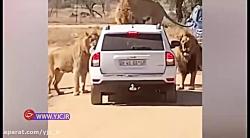 خودروی توریستی در محاص...