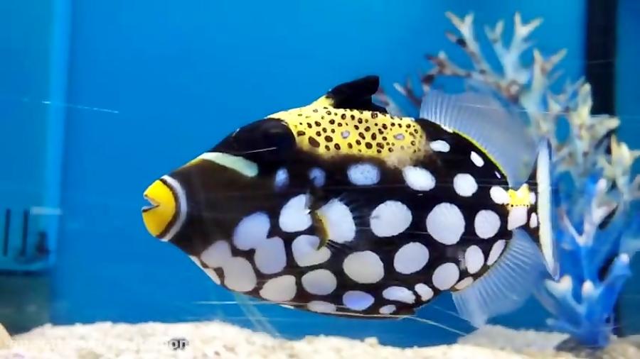 زیباترین ماهی های جهان