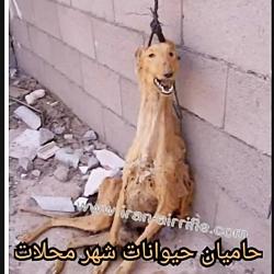 حامیان حیوانات شهر محل...