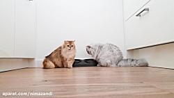 *** آنچه گربه ها در تمام ...