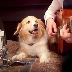 گیتار زدن با همکاری سگ (...