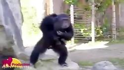باغ وحش و حیوانات خنده ...